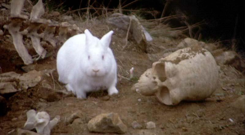 Кролик-убийца из фильма Монти Пайтон и Священный Грааль.